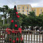 Este próximo miércoles o jueves será el encendido del árbol de Navidad en Zócalo de Veracruz