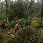 Recolectan más de 250 árboles con la campaña Recicla tu Navidad