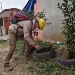 Veracruz, sexto lugar nacional con menos casos de dengue en el inicio de año