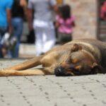 Esta es la multa económica si dejas a tu mascota bajo el sol en Veracruz